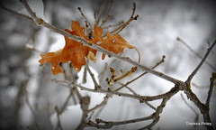 Lonely Leaf {Explored} photo by Theresa Finley