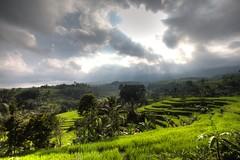 Rice fields photo by YensmitJott