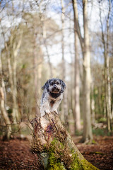 9/52 - King of These Woods. *Explore* photo by Kirstyxo