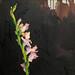 One foot in Eden, Oil on linen, 40x40cm