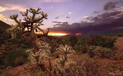 Saguaro National Park West - Tucson, Arizona photo by Andrea Moscato