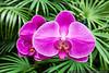 16032694423_b4630fceae_t