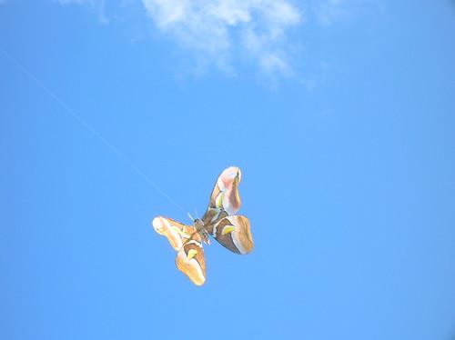 moth kite