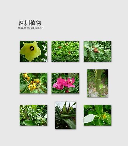 深圳植物 1