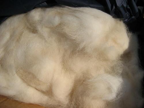 Alaskan Malamute fiber - closeup