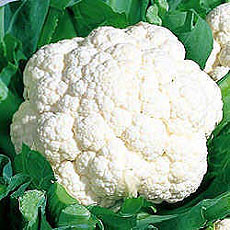 Cauliflower Photo