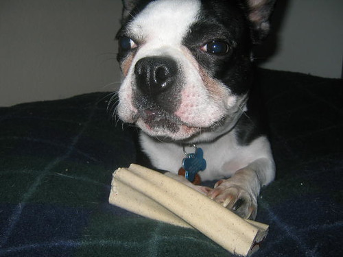 busy bone