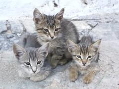 Gatitos en Hydra