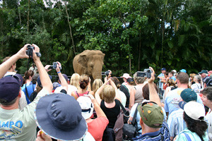 Popular Bimbo the Elephant