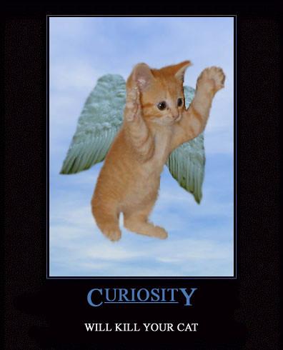 curiositykw5