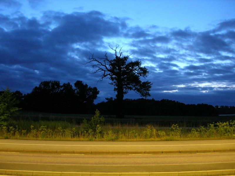 回去的途中路边的树和天空