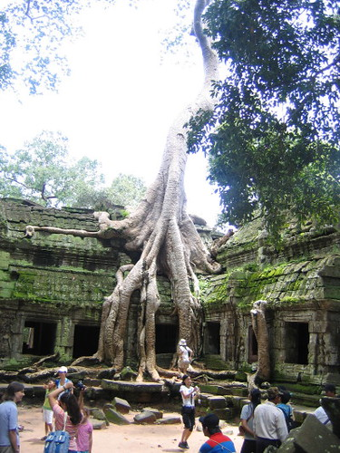 ta_prohm_tree_1