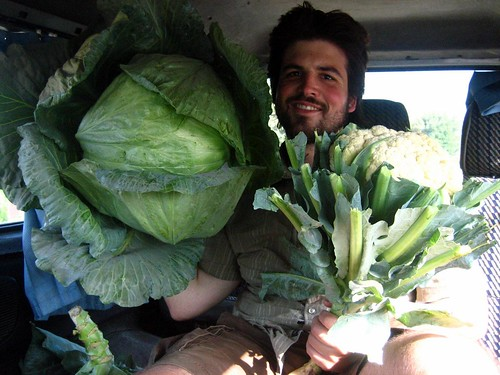 The Cabbage that Ate Husbear