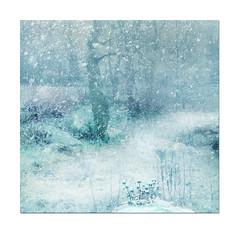 Snow, snow, snow. photo by BirgittaSjostedt