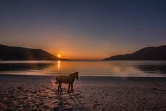Horse at sunset photo by Vagelis Pikoulas
