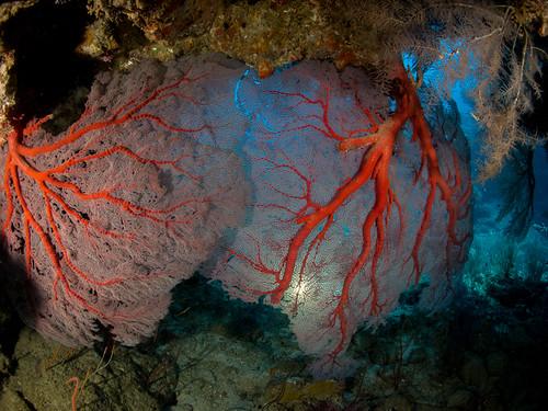 Gorgones et grotte