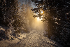 Into the light photo by Clickpix