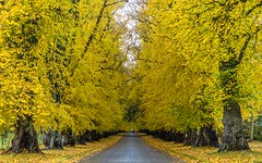 Yellow road photo by GDDigitalArt