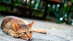 Tare Meow photo by jonathan.leung