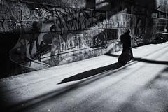 AnT photo by . Jianwei .