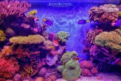 Aquarium photo by Chiara Salvadori
