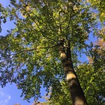 Leaves still on the trees<br/>15 Oct 2016