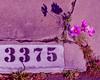 16034714374_d1e4de41c9_t