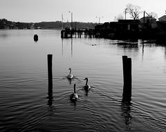 Tranquility photo by bjorbrei