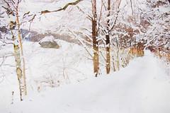 Winter wonderland photo by BirgittaSjostedt
