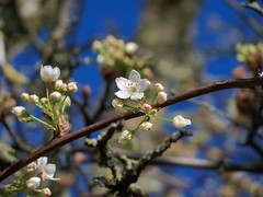 Spring Has Sprung Early photo by trins