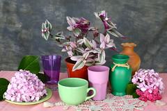 Arreglo con planta y flores photo by leograttoni