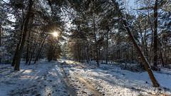 Nationaal Park De Loonse en Drunense Duinen photo by wimzilver