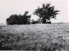 9 - 14 avril 45- Le BM 2 devant Royan- la veille de l'attaque étude du terrain par le cdt Amiel- Fonds Amiel