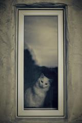 cat in window photo by bjimmy934