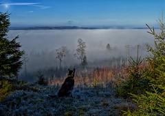 Alaskan Malamute scouts a dreamy forest photo by Patrik Estius