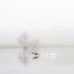 Take Off in the Fog photo by Ida H