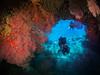 Arche, plongeurs & gorgones