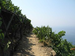 IMG_0308 - path through terraced vinyard