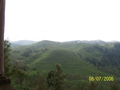 Tea Estate