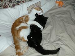 cats in flagrante