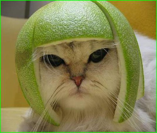 When Lazy Cat Meets Pomelo