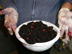Mike picks blackberries to make me feel better