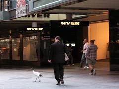 An Ibis Takes A Stroll