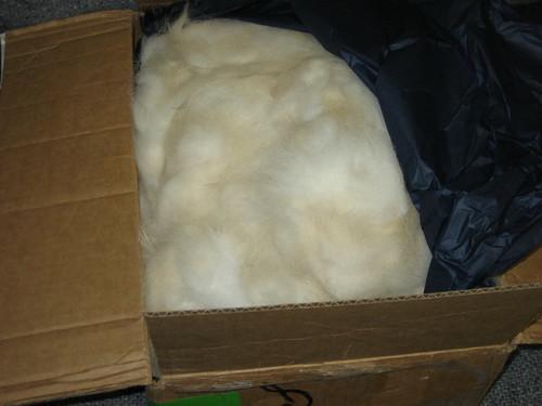 Alaskan Malamute fiber