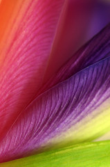 Rainbow photo by Yana_B