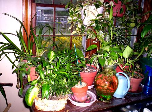 plantfamily2006