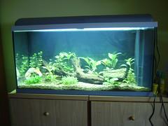Aquari amb plantes sense flaix