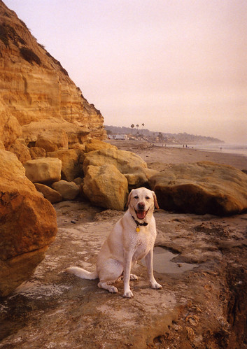 Del Mar's Dog Beach