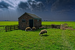 Sheep And Shed photo by Alfred Grupstra Photography