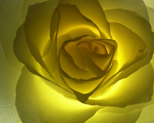 Yellow is the colour of a bright smile